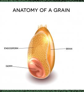 grain-1