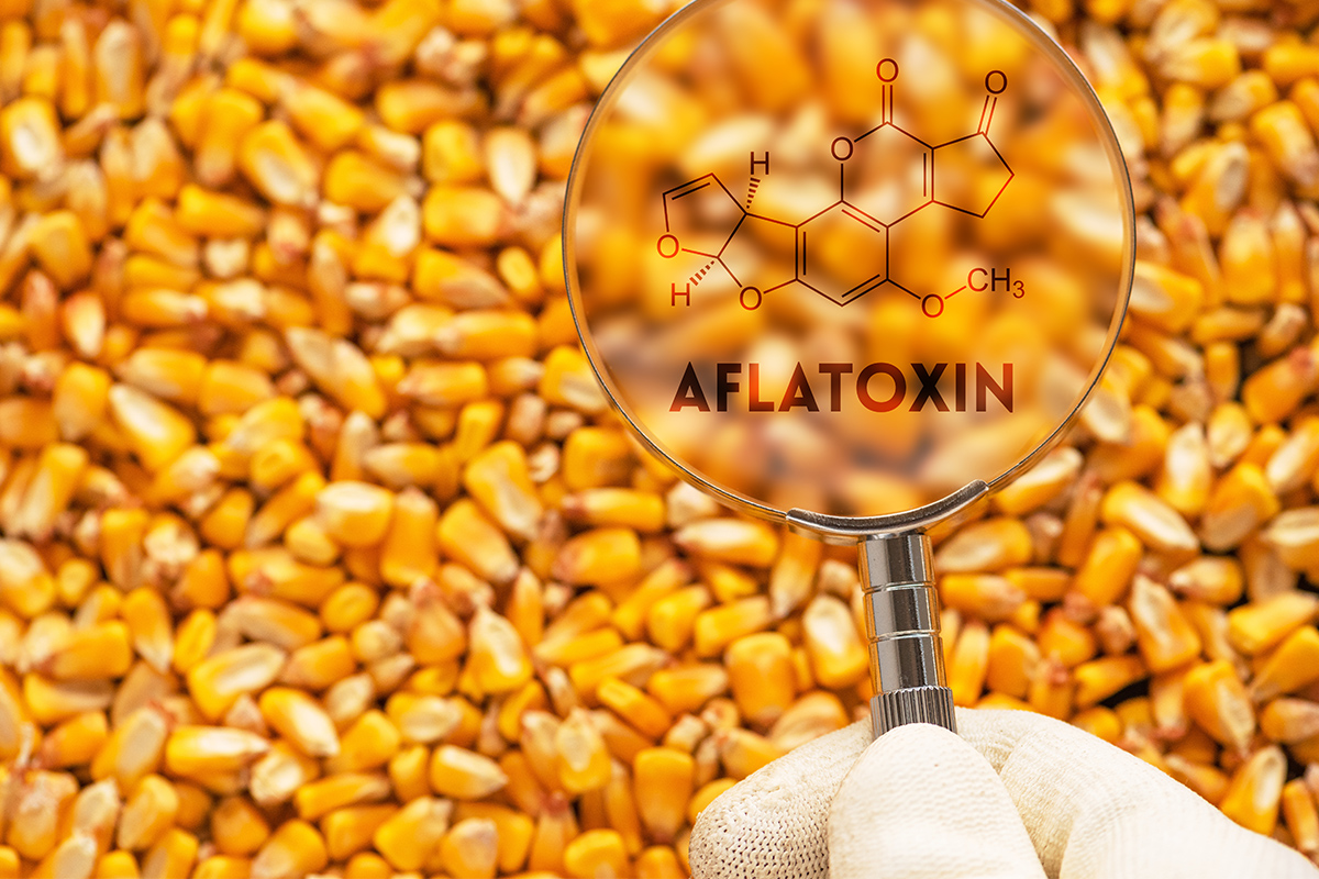 Mycotoxins in Food – How to Avoid Exposure | QA